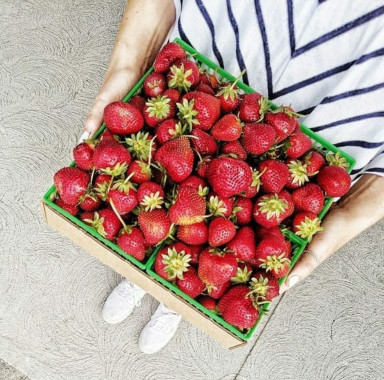 Where to Pick Strawberries in Ontario | Culinary Tourism